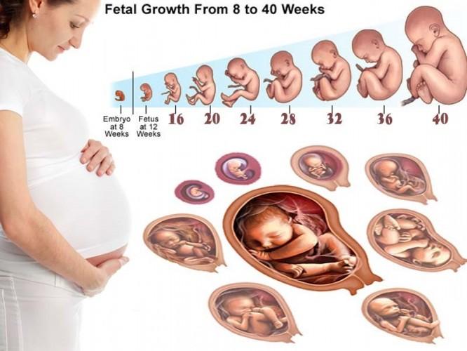 Quá trình phát triển của thai nhi từng tuần, từng tháng mà mẹ nên biết