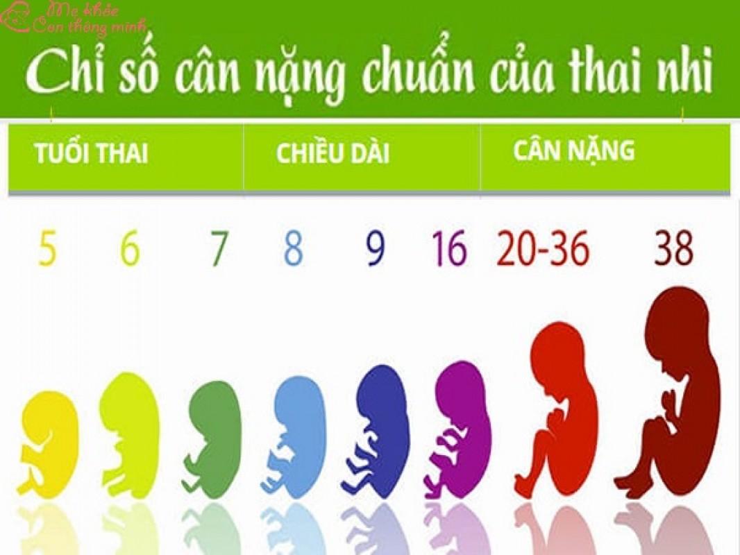 Bảng Cân Nặng Tiêu Chuẩn Của Thai Nhi Mới Nhất Theo Tổ Chức Y Tế WHO
